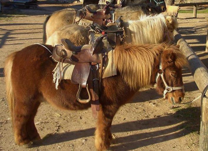 balade à poney au cabanon enchanté à Pourrières dans le var en région paca